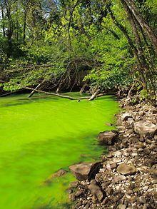 A Potomac River algae bloom. (From Wikipedia.)